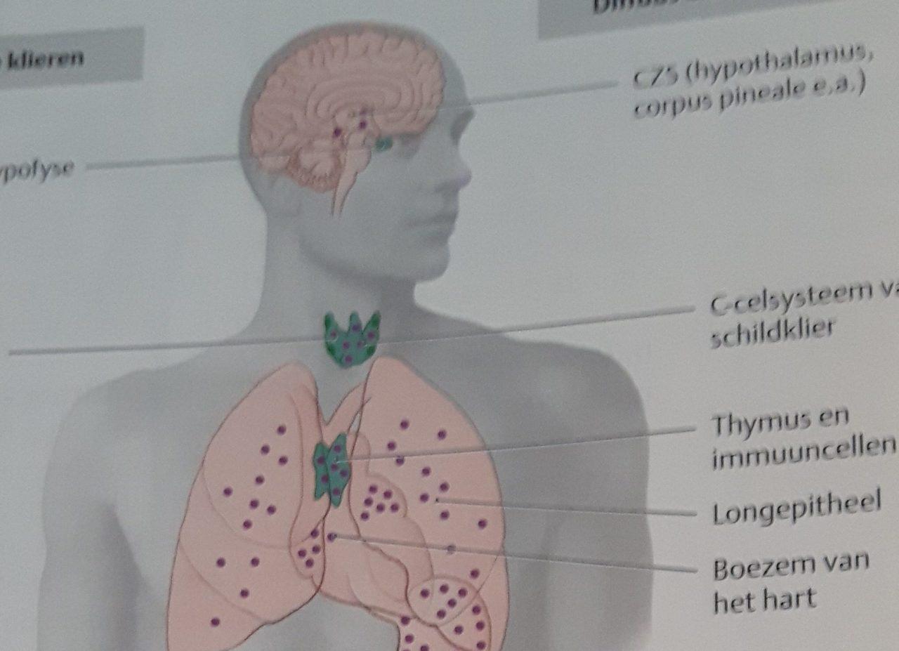 menselijk-lichaam-e1523808594625-1-1280x927.jpg