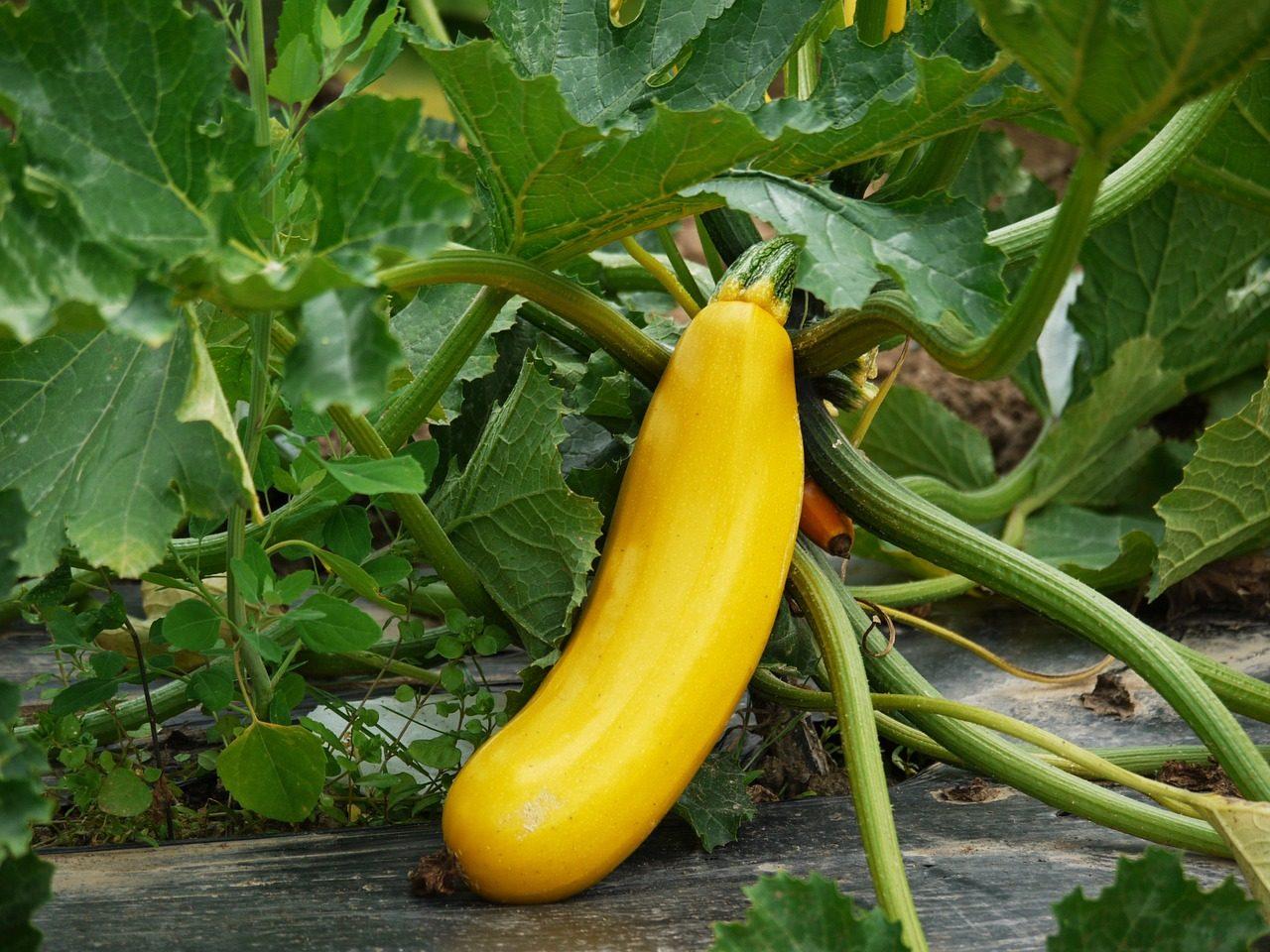 zucchini-1522535_1280-1-1280x960.jpg