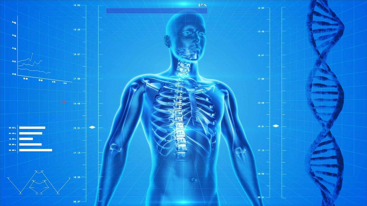 human-skeleton-163715_1280-1280x720.jpg